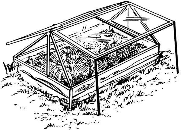 Парники являются распространенными сооружениями для выращивания рассады, теплолюбивых культур
