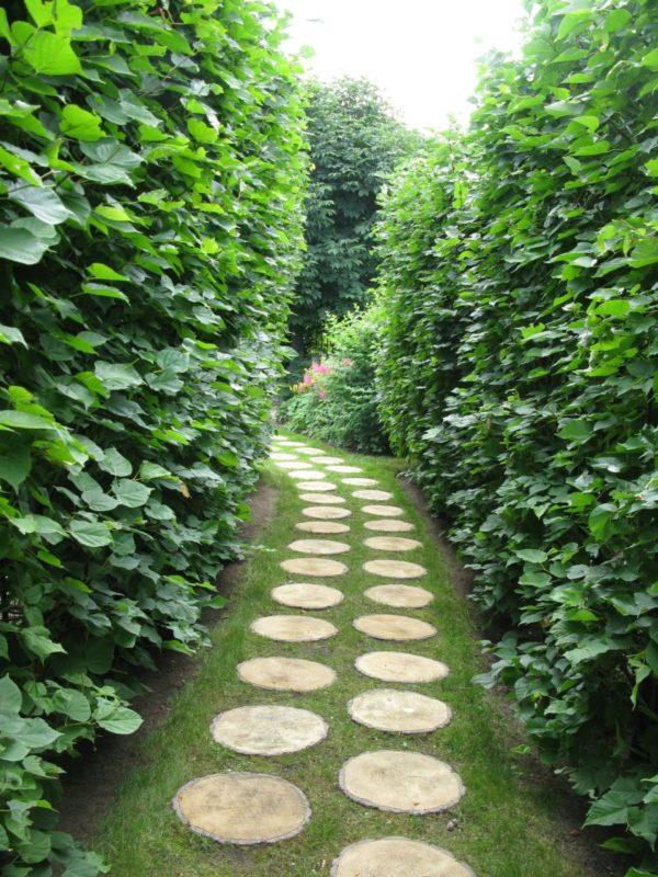 Живая изгородь выделит аллеи и дорожки