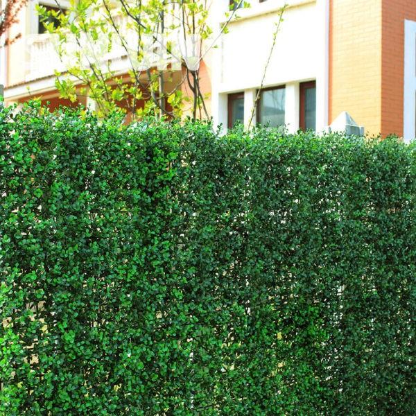 Изгородь из вечнозелёных многолетников защитит от пыли и наполнит воздух кислородом
