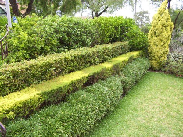 Многорядная каскадная изгородь