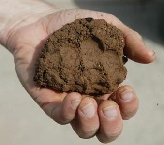 На жирной глине сохраняются следы от пальцев