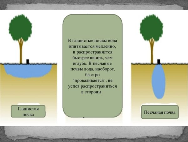 Свойства почв разного типа