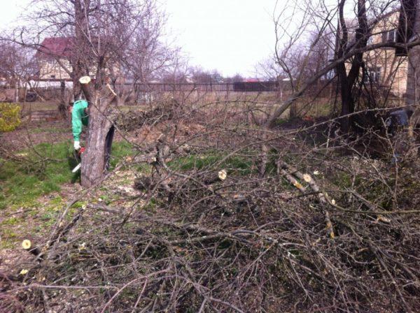 Ненужные деревья убираются