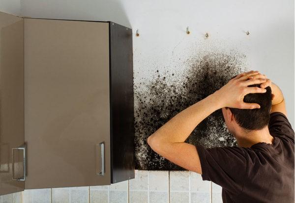 Плесень и грибок в ванной комнате, в квартире, доме: причины возникновения, советы и средства для избавления от них. Чем опасны плесень и грибок в жилом помещении для здоровья людей?
